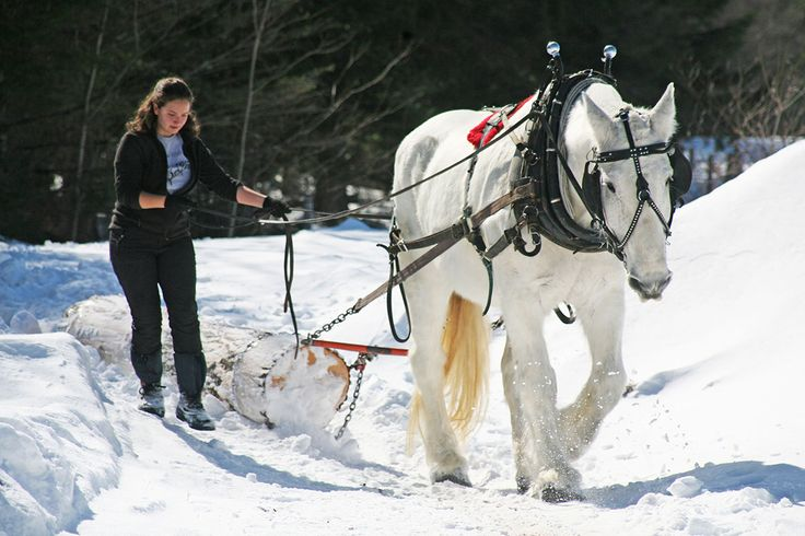 Want to Master Draft-Horse Farming? Sterling College'll Teach You How - http://modernfarmer.com/2015/12/sterling-college-draft-horse-management/?utm_source=PN&utm_medium=Pinterest&utm_campaign=SNAP%2Bfrom%2BModern+Farmer