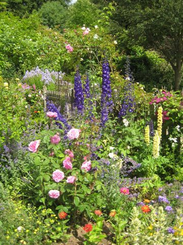 17 best ideas about cottage garden plants on pinterest for Typical landscaping plants