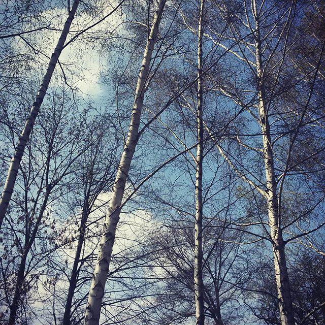 mrs.g.a.l.aChłoniemy Cię Świecie⛅ #drzewo #tree #wiosna #spring #poland #nature #natura #niebo #polska #sky #spacer #park #instaphoto #słońce #trees #przyroda #polishgirl #chmury #sun #drzewa #krajobraz #super_polska #naturelovers #clouds #happy #ig_today #brzoza #sunsetporn #cienie #las
