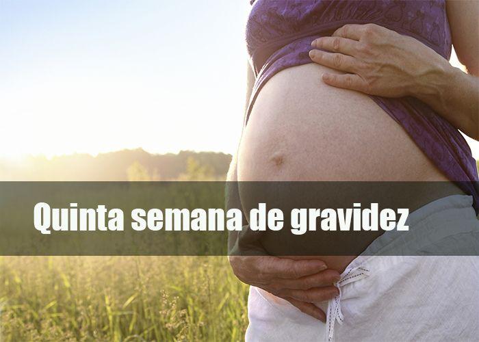 Gravidez e Gestação   5 semana de gravidez   http://gravidezegestacao.com