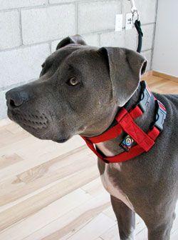 The Illusion Dog Collar & Leash System (Next Generation) | Dog Whisperer Cesar Millan
