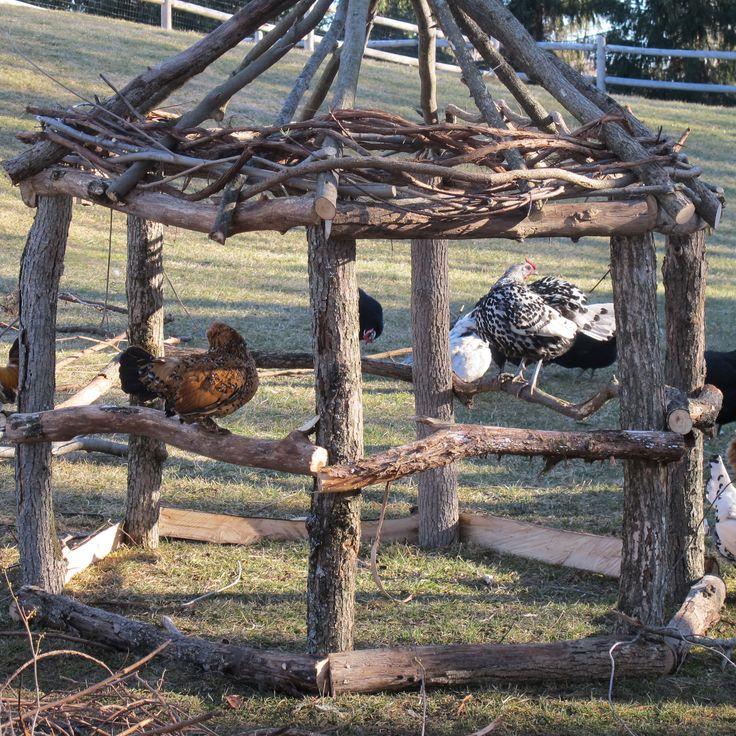 Chicken gazebo in-progress! Anti-hawk hut. via The Chicken Chick on Facebook
