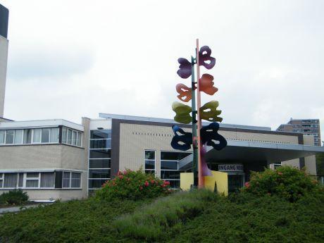 Vlinderboom - Máxima Medisch Centrum. Het logo van het Diaconessenhuis was hierop gebaseerd. #ziekenhuis