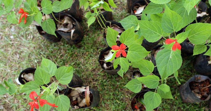 7 dicas para plantar uma horta em casa (mesmo com pouco espaço)