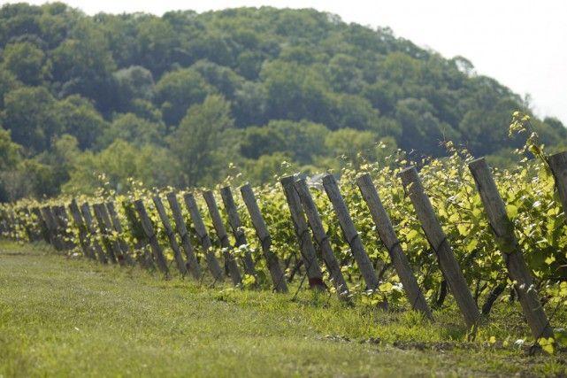 À la découverte des vignobles canadiens