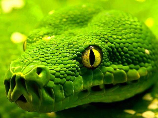 Snake - The snake is the ultimate illusionist silently watching over you.  You've gained this gift by successfully stealing something back that was once yours.