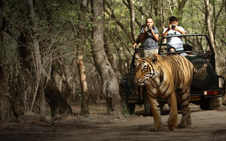 This #tourpackage includes your #sightseeing of the one of the most #beautiful places in North India.It starts with Delhi arrival & sightseeing and your last stop is #Ranthambore which is #famous for #RanthamboreNationalPark which is a vast #wildlife reserve near the town of #SawaiMadhopur in #Rajasthan