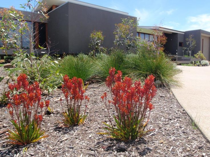 787 best garden native australian plants images on for Native plant garden designs