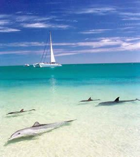 The dolphins coming to shore at Monkey Mia, Western Australia - a desert paradise.