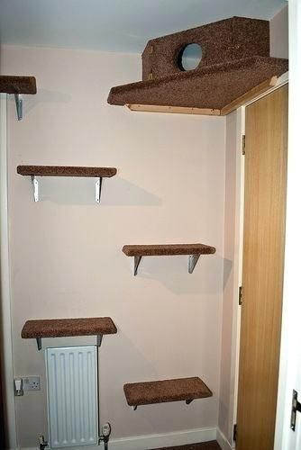 Cat Climbing Wall Best Cat Wall Shelves Ideas On Cat Shelves Cat