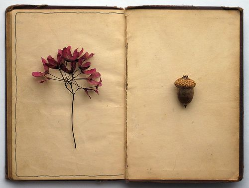 Botanical diaryNature Journals, Antiques Book, Vintage Book, Autumn, Art, Cory Kindred, Press Flower, Altered Book, Dry Flower