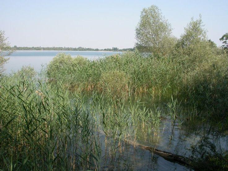 Lac d'Orient - Forêt d'orient - Grand lac public - Aube (10) - Le lac de la forêt d'Orient est un lac artificiel situé dans le bassin de la haute Seine, dans le département de l'Aube et dans le parc naturel régional de la forêt d'Orient. Mis en service en 1966, ce lac-réservoir, en dérivation par rapport au cours de la Seine, fait partie d'un ensemble de quatre ouvrages destiné à maîtriser le débit du fleuve en limitant les crues et en assurant un étiage minimum.