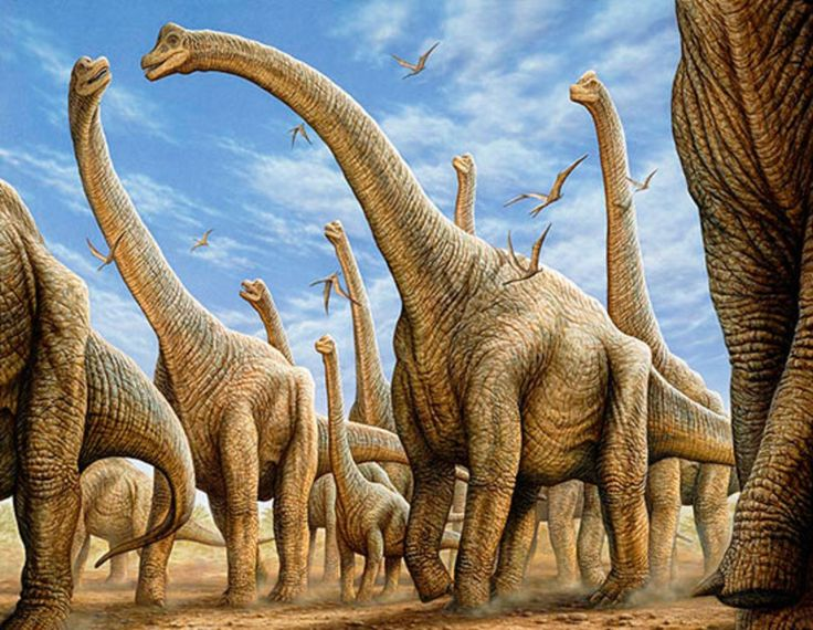 Art illustration -  Dinosaurs - Brachiosaurus:  is an extinct genus of sauropod dinosaur from the Upper Jurassic of North America Morrison Formation, about 154 and 153 million years ago, from the Kimmeridgian to the Tithonian