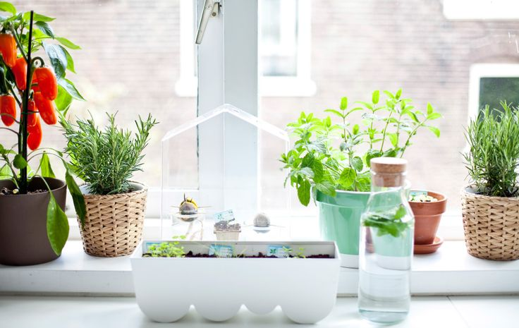 No need to worry about the carbon footprint of these herbs! #IKEAIDEAS: Get windowsill gardening #IKEAFAMILYMAG