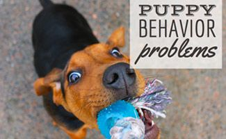 Puppy Behavior Problems