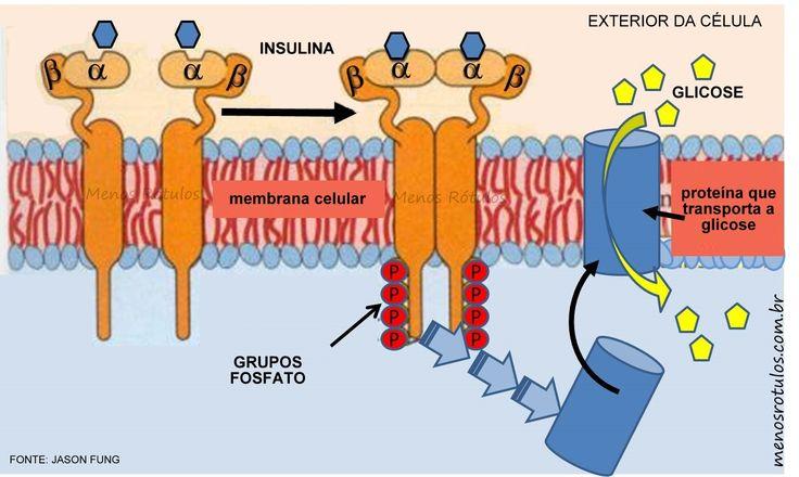 MENOS RÓTULOS...: Um novo paradigma da Resistência à Insulina - por Jason Fung