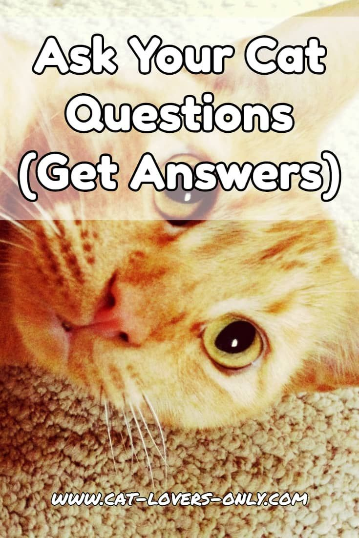 Ask Your Cat Questions Start A Discussion Cat Questions Cats Buy A Kitten