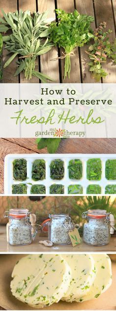 How to Harvest and Prepare Fresh Herbs