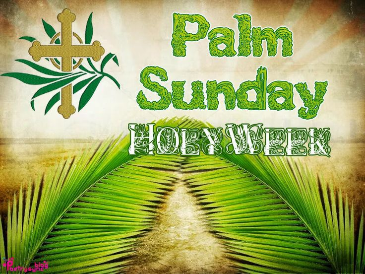 The fronds and foliage of Palm Sunday