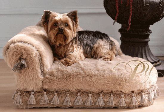 "Pet-Friendly Decorating -- Cute Dog Bed from 3/5/13 blog ""Dog-Friendly Designing"""