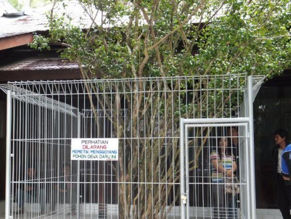 Pohon Dewandaru Gunung Kawi, Kejatuhan Daunnya Dipercaya Bisa Kaya https://malangtoday.net/wp-content/uploads/2017/03/DSC_9798.jpg MALANGTODAY.NET– Berbicara mengenai Gunung Kawi tidak lengkap rasanya jika tidak membahas tentang mitos di dalamnya. Di pesarean Gunung Kawi terdapat sebuah pohon yang cukup terkenal karena dipercaya dapat memudahkan dalam hal mencari rezeki. Ya pohon tersebut adalah pohon Dewandaru atau... https://malangtoday.net/rubrik/story/pohon-dewand