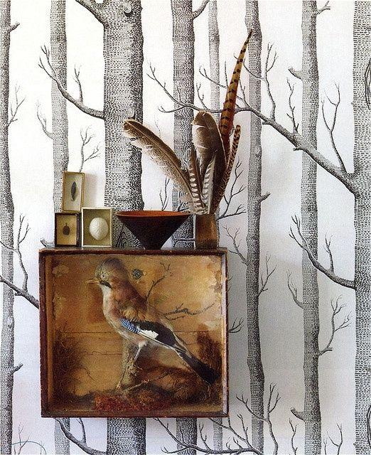 Insecten, schedels en veren in huis - INTERIOR JUNKIE