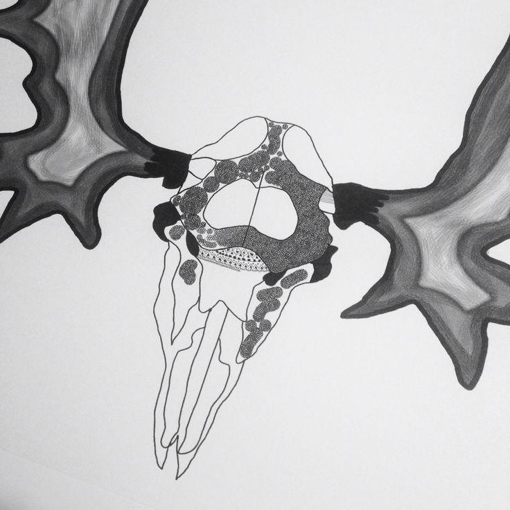 Moose skull.