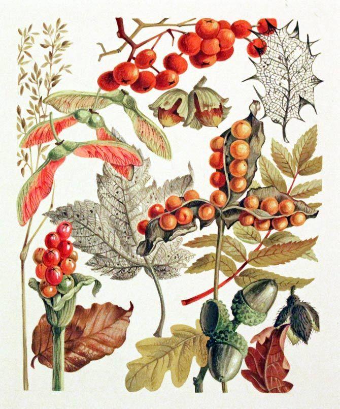 I love Marjolie's work - water color botanical studies…