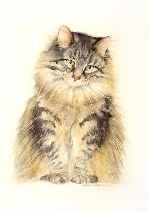 Maine Coon Cat Print By Bonnie Rinier
