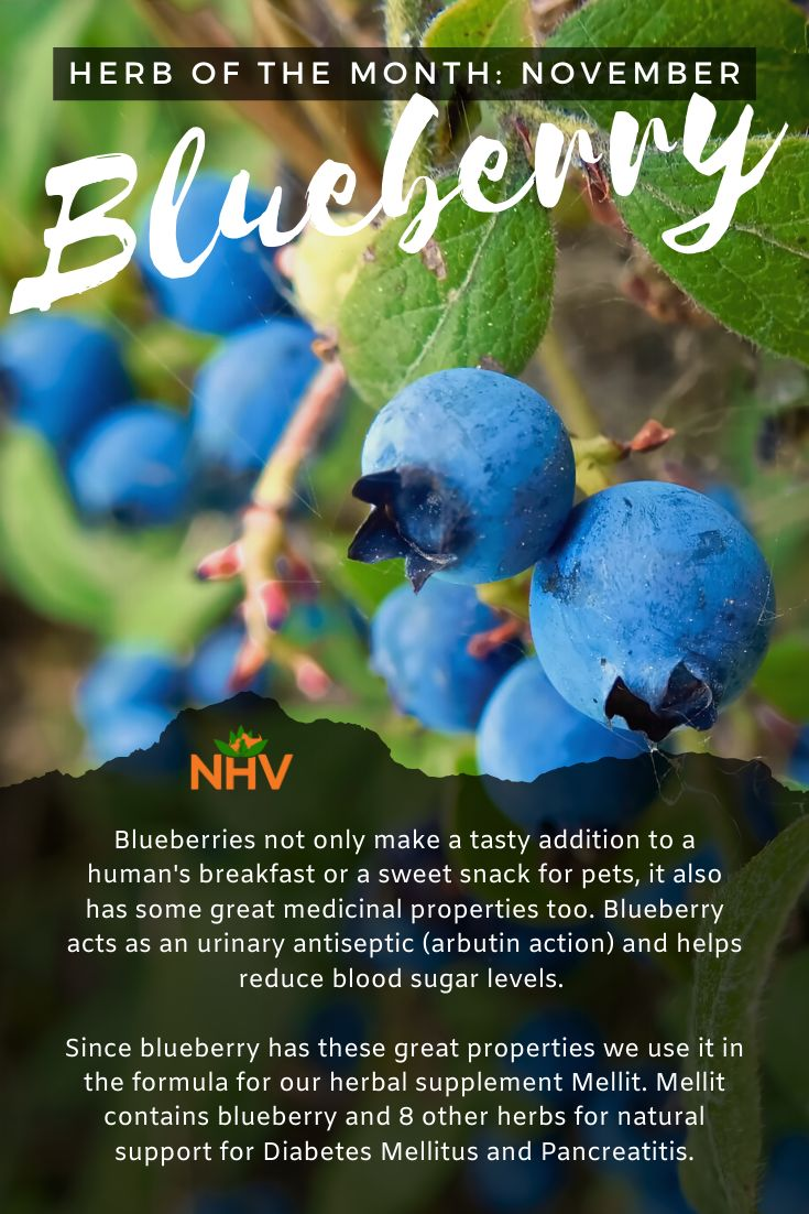 Not only a tasty snack, Blueberries can support diabetic