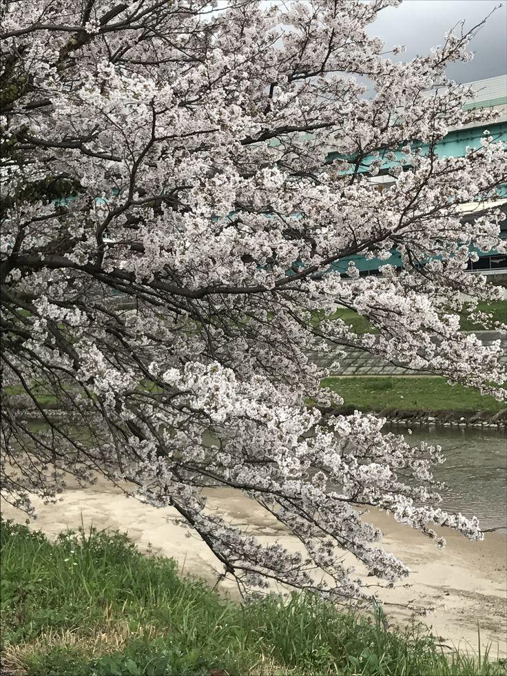 福岡県 今年も、咲いたね。