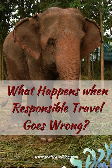 How to avoid unethical elephant attractions chiang mai
