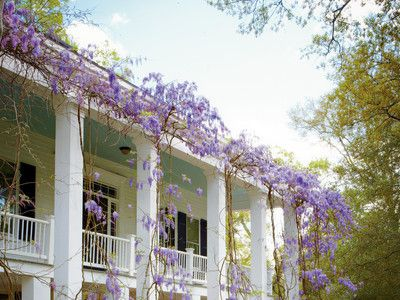 Wisteria Pruning 101 | SouthernLiving