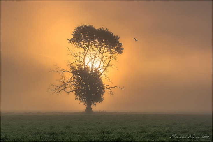 Tree, Sunrise