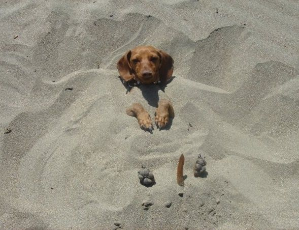 Yep, I can play along!!! Look at my tail in the sand