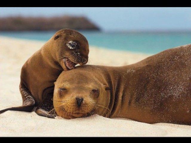 immagini-natura-animali-piu-belle-ultimi-dieci-anni (26)