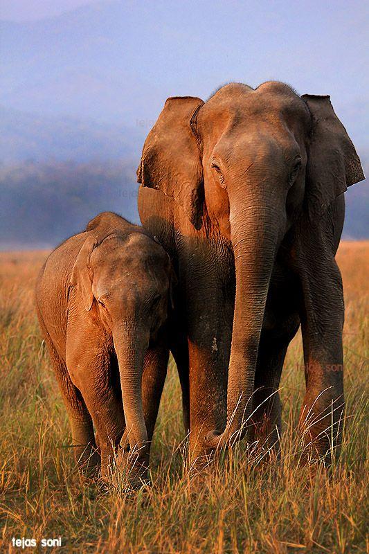 Elephants in Uttarakhand, India