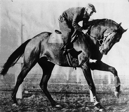 Bernborough (1939–1960) was an outstanding Australian-bred Thoroughbred racehorse who raced between 1941 to 1946. He carried heavy weights to victory in 15 consecutive wins including the Doomben 10,000 carrying 10 stone 5 pounds. He was foaled at Rosalie Plains in the Darling Downs region of South East Queensland. The bay colt, was by the good sire, Emborough (GB) from Bern Maid by Bernard (GB), who was the paternal grandson of Gainsborough, winner of the English Triple Crown in 1918.