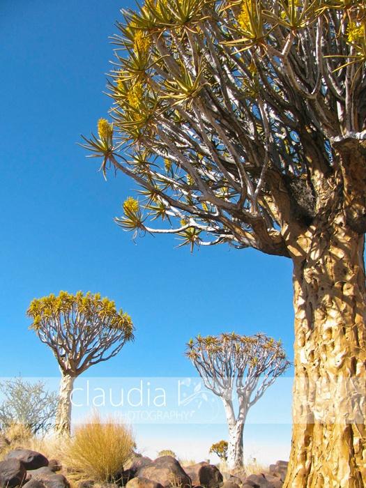 Kokerboomwoud, Namibie