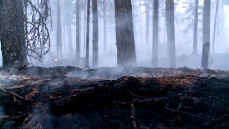Branden i Västmanland, MSB:s stöd
