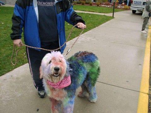 24 best Dog dye images on Pinterest