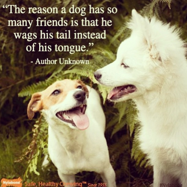 Double Tap If You Love This Quote! #dogs #friendship