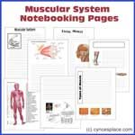 Notebooking Pages that go with all the systems of the body. There are multiple sets to download!
