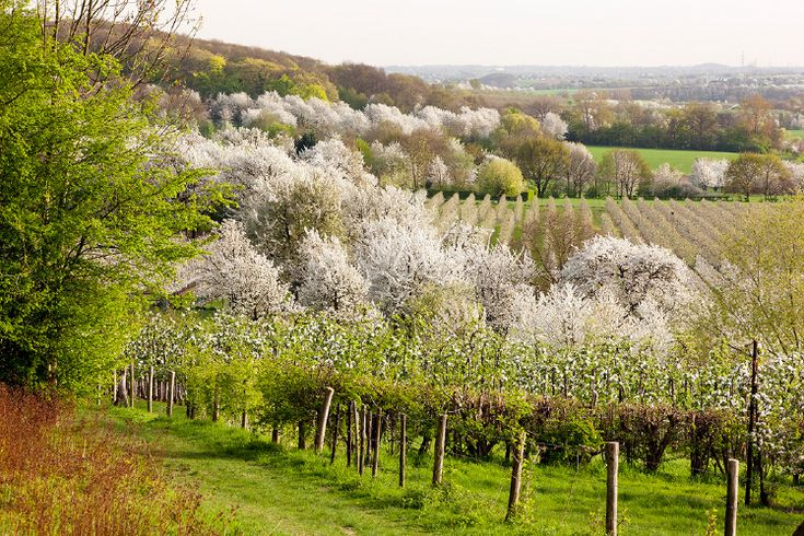 Tips: Natuur fotograferen in april, Inspiratie | Zoom.nl