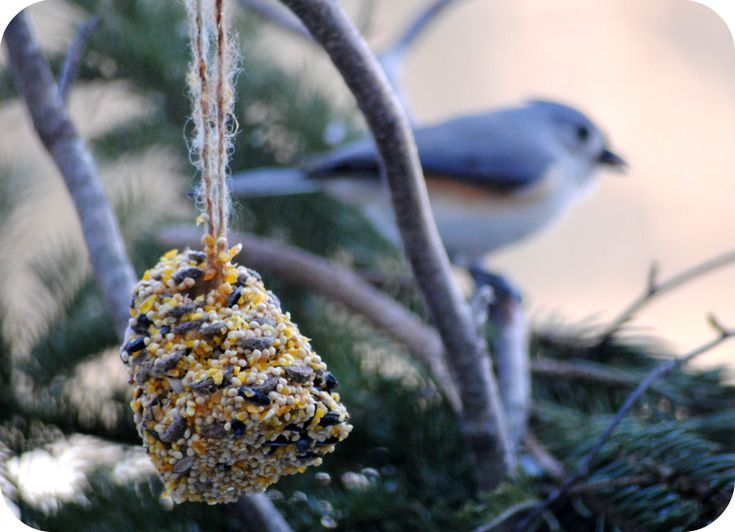 Pine cone bird feeder. I remember making these as a kid.