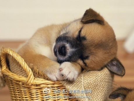 sleepy dog :)