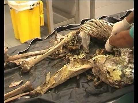 MSc Forensic Anthropology