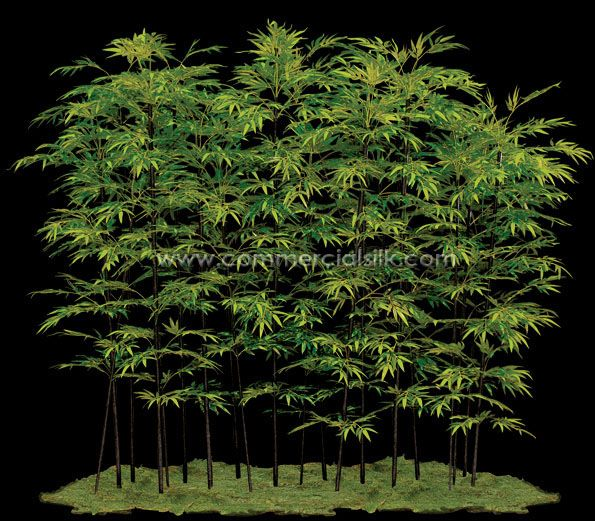 black bamboo grove