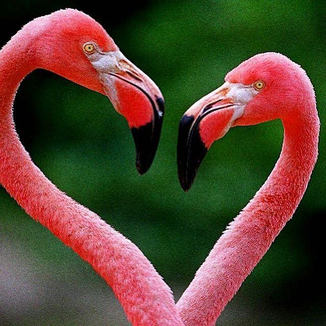 Partij Strandtassen : Beste idee?n over roze flamingo s op