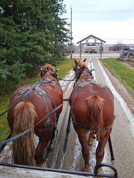 On the third day of Christmas...  Follow our story at https://www.facebook.com/pages/Conestogo-River-Horseback-Adventures/300198049923  #BelgianHorses #SleighTeams #DashingThroughTheSnow #SleighRide #WinterOnTheFarm #Waterloo #12DaysOfChristmas